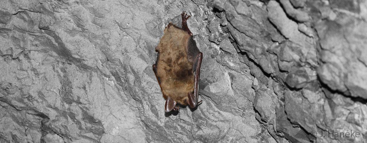 Biologie-Fledermaus_1280x500px.jpg